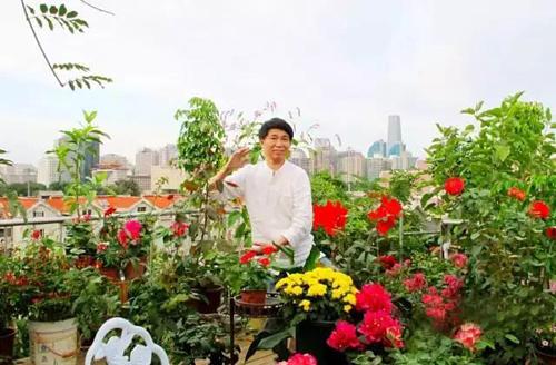 khu-vuon-hong-tren-san-thuong-khien-hang-xom-noi-gian-6