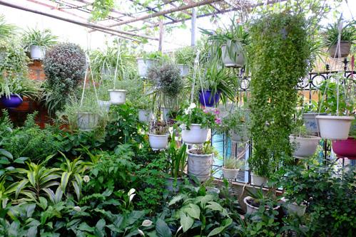 Những vườn cây trên mái giúp lọc không khí ở Hà Nội - 3