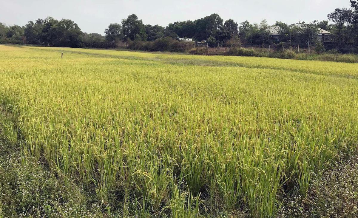 Gia đình Sài Gòn 6 năm không mua gạo, thịt