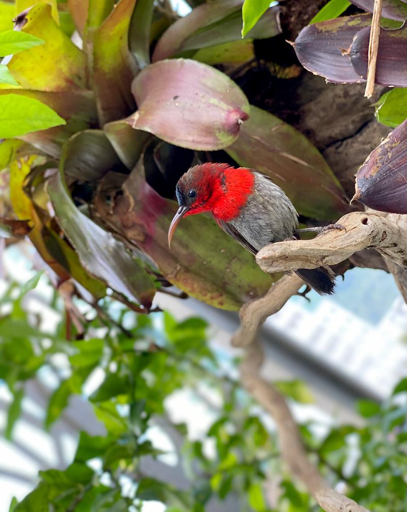 Doanh nhân làm vườn chim trên sân thượng
