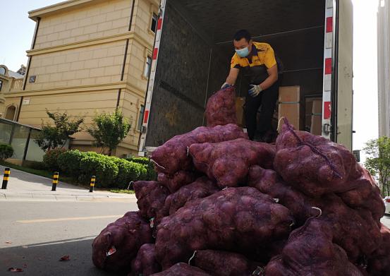 Nhân viên giao hàng chật phải đi 50 vòng vận chuyển số hành. Ảnh: Shandong.