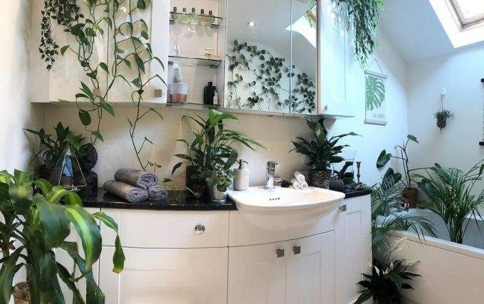 Phòng tắm nhiều nắng nên được Joe bày các loại cây đặc biệt. Ảnh:UK House Plants.