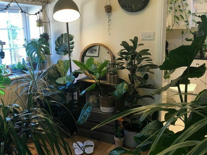 Nhà nhiều cây xanh đến nỗi Joe không có chỗ để quần áo mà phải mang lên gác xép. Ảnh:UK House Plants.