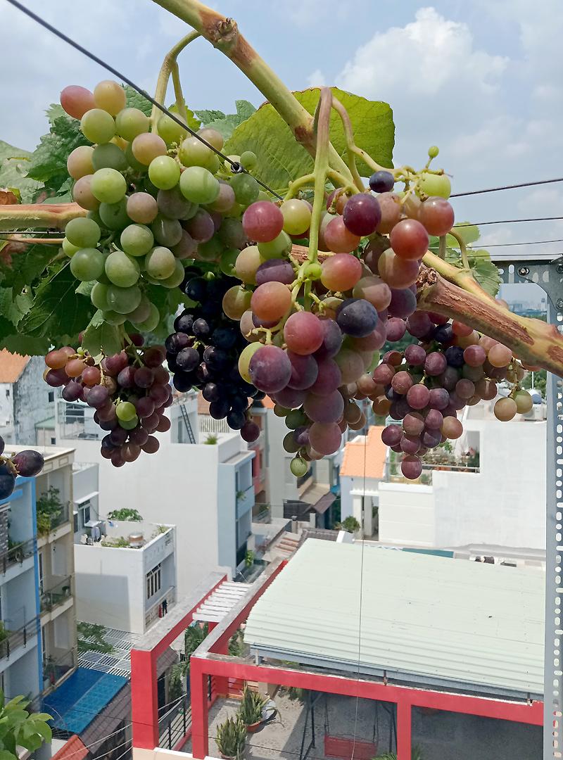Vườncây ăn quả trên nóc tầng 4