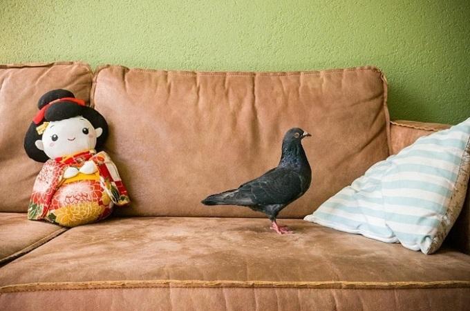 Tình bạn của nhiếp ảnh gia và đôi bồ câu