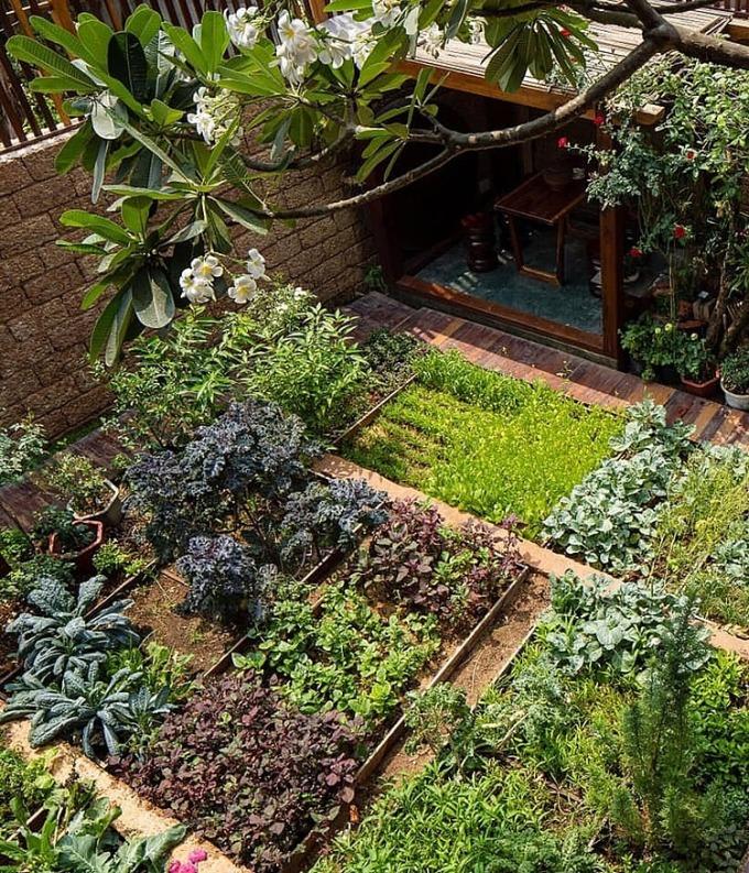 Vườn rau nhà chị Kim Hằng. Ảnh: NVCC.