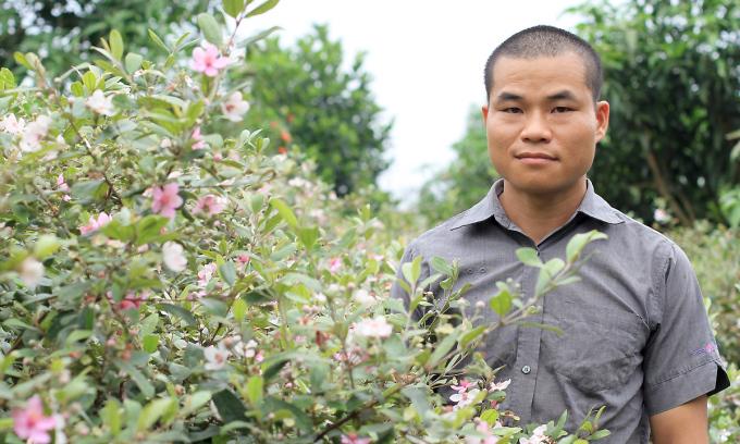 Vườn sim tại nhà của Nông Chí Khiêm có khoảng 3.000 gốc. Mỗi cây 5 tuổi này có thể cho thu hoạch 7 kg quả