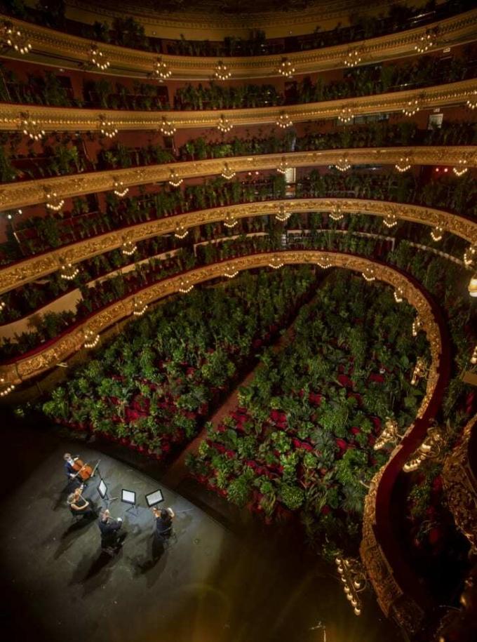 Buổi hòa nhạc trước hơn 2.000 cái cây