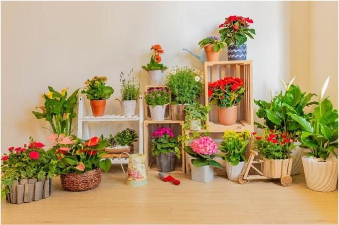 Với hơn 25 năm trồng và cung cấp hoa tươi tại thị trường Việt Nam, Dalat Hasfarm là một trong những địa chỉ gợi ý tin cậy cho người yêu hoa. Hoa chậu của Dalat Hasfarm đa dạng về chủng loại, chất lượng hoa sạch theo định hướng nông nghiệp bền vững, bảo đảm an toàn cho người sử dụng và thân thiện với môi trường.