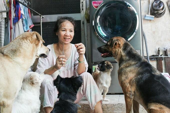 Thỉnh thoảng bà Thủy cho lũ chó ăn xúc xích, đây là món quà vặt khoái khẩu của chúng. Ảnh: Diệp Phan.