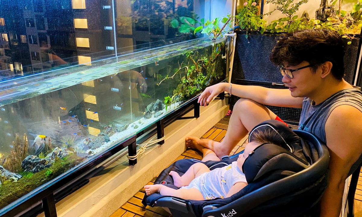 Bể cá thủy sinh trên ban công của ông bố trẻ