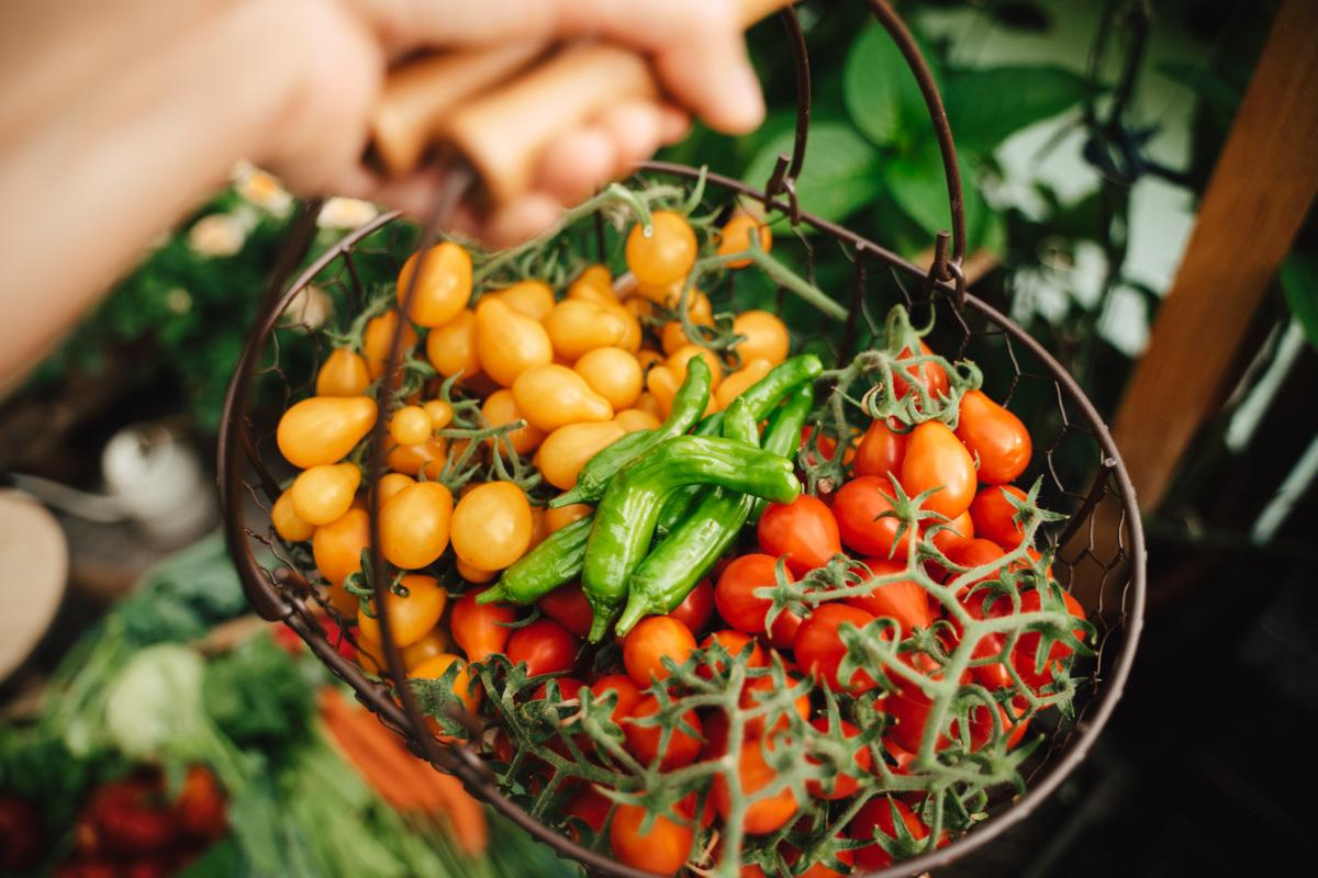 Mảnh vườn 8 m2 đầy rau quả của mẹ Việt ở Đức