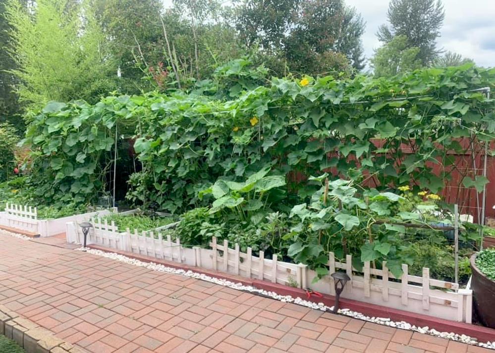 Người phụ nữ 10 năm tái hiện khu vườn Việt ở Mỹ