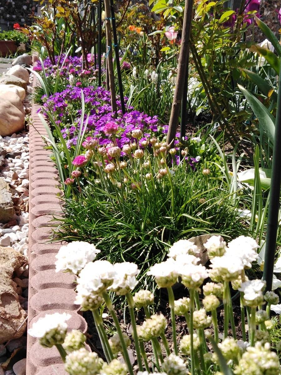 Vườn hoa trăm loài của người phụ nữ Việt ở Séc