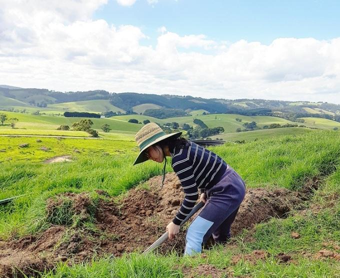 Bao quanh nhà Thảo là đồi núi. Hàng ngày, cô phải đi chăn bò, đào đất, bón phân, tưới nước cho cỏ. Ảnh: Nhân vật cung cấp.