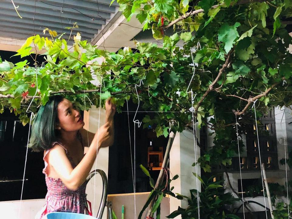 Vườn trái cây trên sân thượng 25 m2