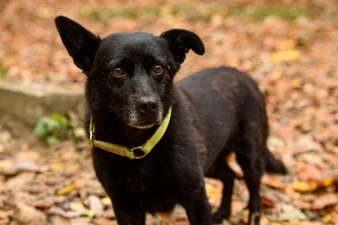 Gary đã được chủ ở ngôi nhà tạm thời nhận nuôi vĩnh viễn sau chuyến hành trình gần 30km tìm về. Ảnh: Paka dla Zwierzaka.