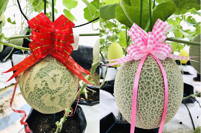 Những quả dưa được nữ chủ nhân khắc chữ, buộc nơ. Ngoài 10 quả được bán đấu giá làm từ thiện, số còn lại  làm quà tặng cho người thân và bạn bè dịp Tết nguyên đán sắp tới.