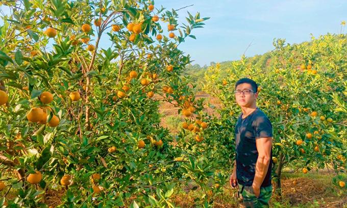 Từ không biết trồng một cái cây, giờ đây Khuất Cao Khuê  am hiểu từng thớ đất, thổ nhưỡng, chu kì sinh trưởng, ra hoa kết trái của từng loại bưởi, cam trong vườn. Ảnh: Nhân vật cung cấp.