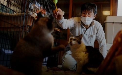 Sakae Kato chơi với những con mèo mà anh ấy đã cứu, tên là Mokkun và Charm, cả hai đều bị nhiễm virus bệnh bạch cầu ở mèo, ngày 20/ 2/ 2021. Ảnh: Reuters