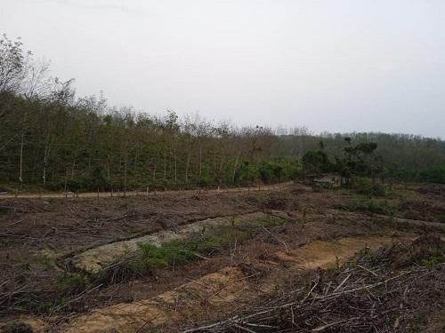 Một góc rẫy rộng 3 héc ta của Nguyễn Tự Long sau khi thu hoạch keo. Đất rộng, một mình, Long không thể đảm tận dụng hết. Ảnh: Nhân vật cung cấp.