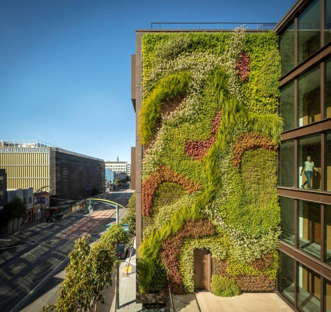 Trên bức tường cao gần 15 mét, nhóm thiết kế trồng 13 loại cây, xếp theo đường cong. Ảnh: Woods Bagot.