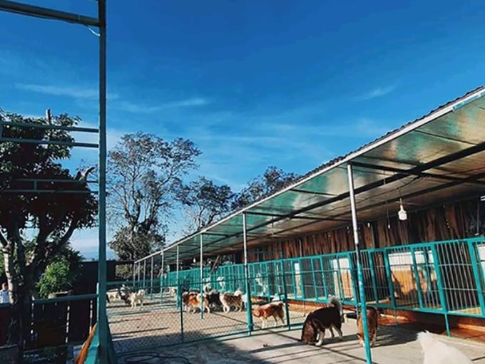 Một góc trang trại của Tiến. Trang trại này hiện có gần 200 con chó cảnh các loại. Ảnh: Nhân vật cung cấp.