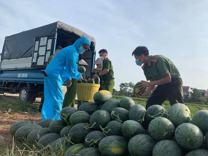 Công an huyện Yên Dũng giúp nông dân thu hoạch dưa hấu tại thôn Chùa, xã Tiến Dũng ngày 30/5 . Ảnh: Công an Yên Dũng