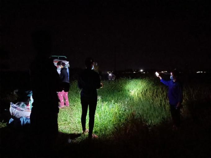 Đoàn thanh niên xã Ngọc Lý soi đèn hỗ trợ đồng đội hỗ trợ thu hoạch lúa giúp bà con nông dân. Ảnh: Huyện đoàn Tân Yên.
