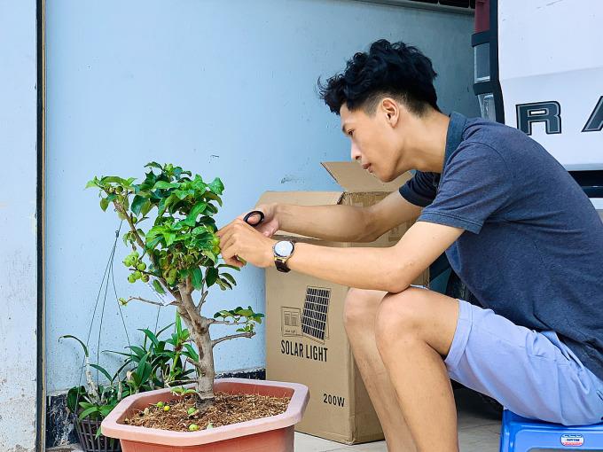 Xuân Trường đang tỉa cây táo trong sân nhà sáng ngày 5/6. Ảnh: Xuân Trường.