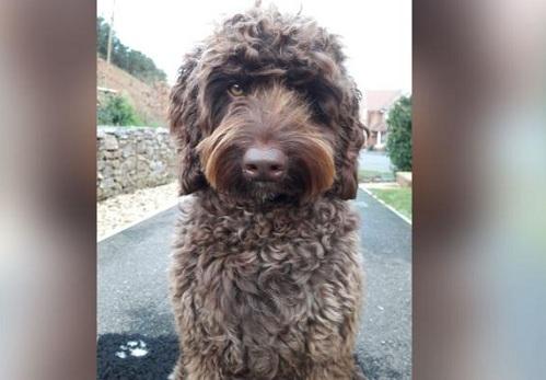 Chú chó Digby cứu người phụ nữ khỏi tự sát. Ảnh: CNN.