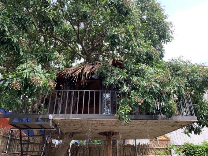 Căn nhà nằm gọn dưới tán cây nhãn.