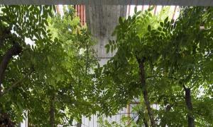 z2613845060571 1e74aa6010cc327 2959 9860 1627182099 - 'Khu rừng nhiệt đới' 252 m2 kết hợp cây xanh vào không gian nội thất