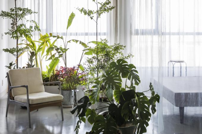 Cây cối vừa giúp gia chủ thư giãn, vừa có thể tạo thành vách ngăn ước lệ giữa không gian sinh hoạt và nơi thư giãn. Ảnh: Ảnh: Hiroyuki Oki/ Nhabe Scholae.