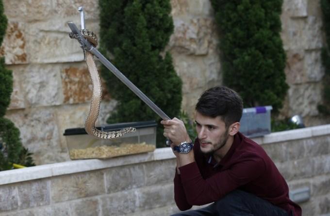 Mohammed Nassri đang kiểm tra một con rắn tại nhà, hôm 29/9. Ảnh: Xinhua.